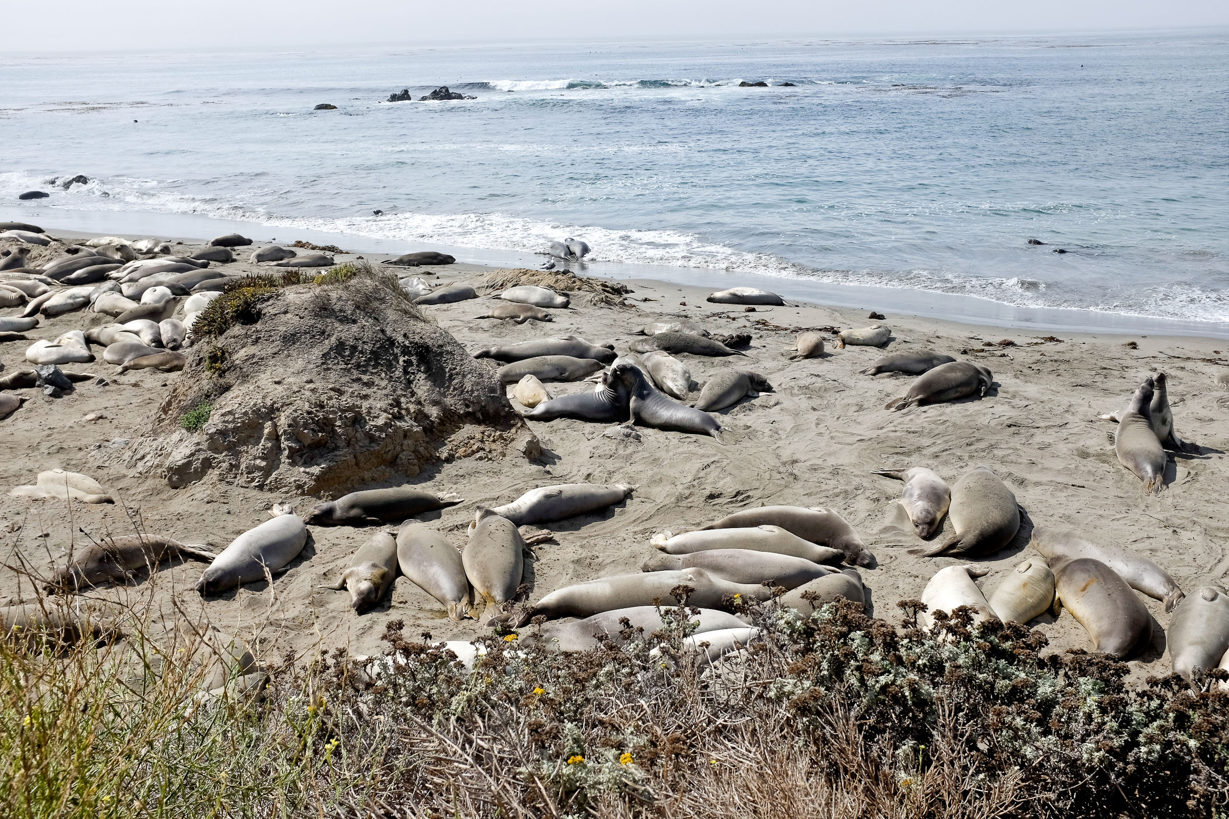 The elephant seal observatory