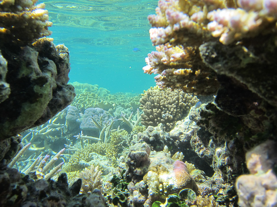 Snorkeling the Great Barrier Reef!