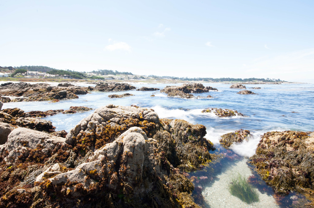 a quick guide to 17 mile drive in pebble beach