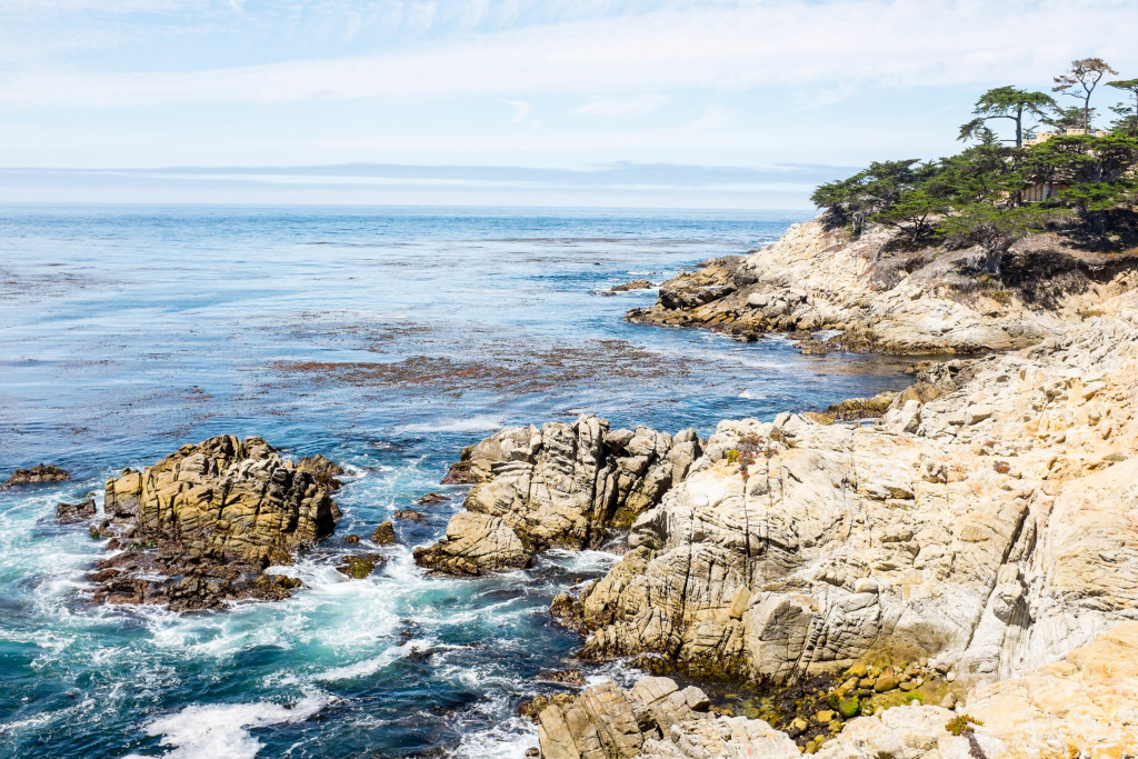 view from steps to lone cypress in pebble beach california