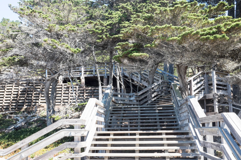 steps to the lone cypress on 17 mile drive in pebble beach california