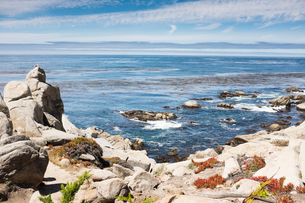 Ghost tree point in pebble beach california