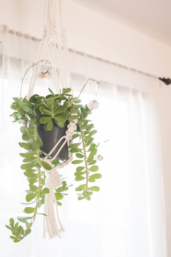 7 foolproof secrets to decorating with plants - macrame hanging planter