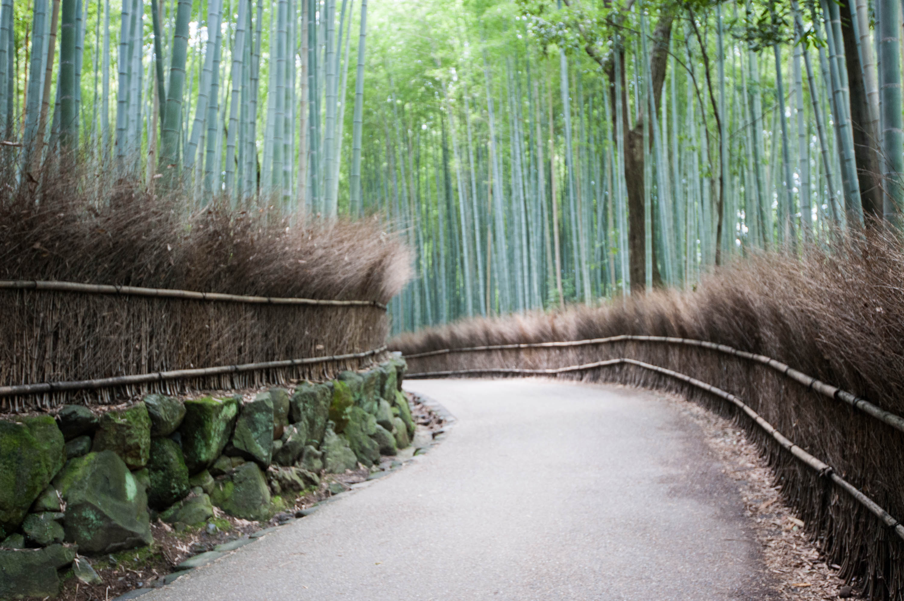 A Quick Travel Guide to Kyoto