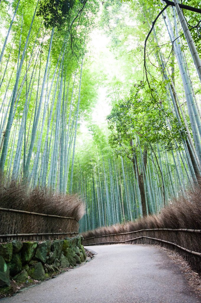 10 snapshots that will make you want to visit Japan- Arashiyama Bamboo Forest