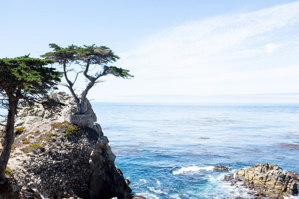 The lone cypress on 17 mile drive in pebble beach, california