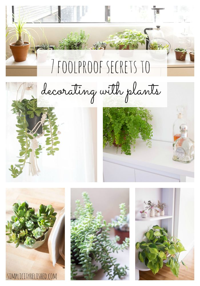 7 Foolproof Secrets to Decorating With Plants- it is much easier than you think
