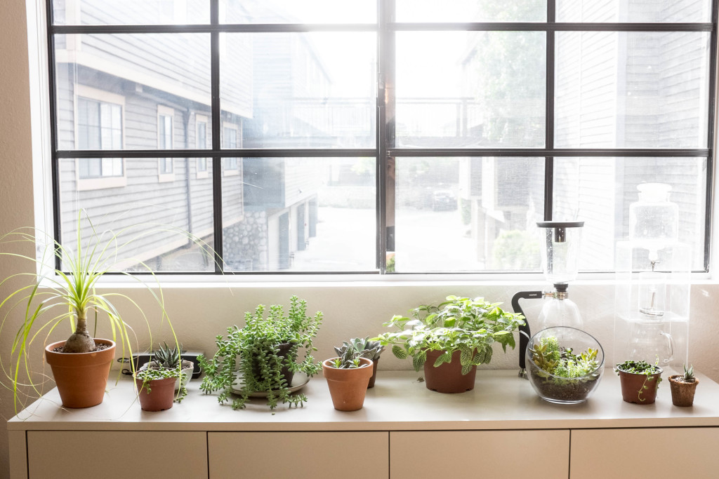 7 foolproof secrets to decorating with plants- buffet table