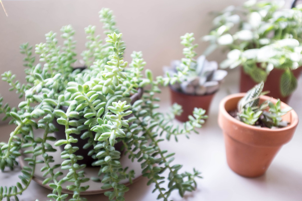 7 foolproof secrets to decorating with plants- detail