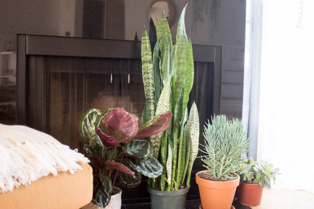 7 foolproof secrets to decorating with plants- fireplace