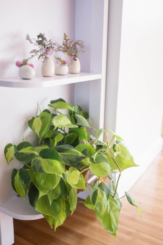 7 foolproof secrets to decorating with plants- philodendron
