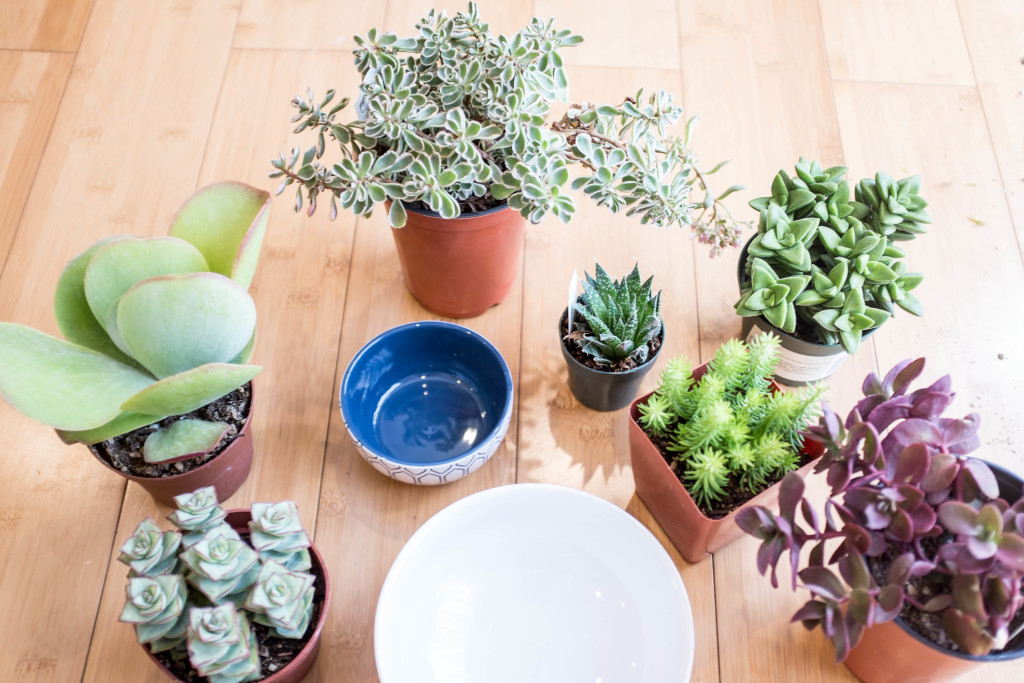 How to plant a succulent garden in a bowl- materials