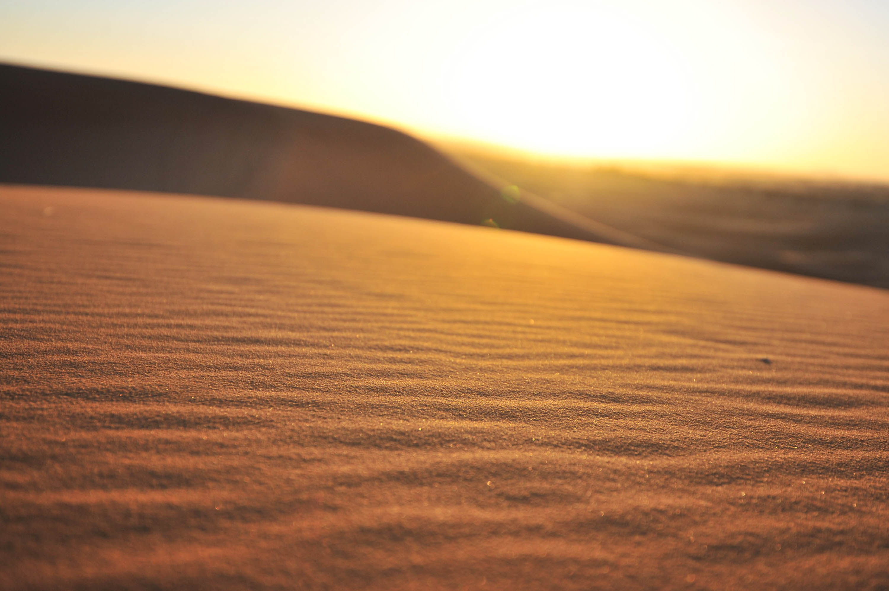Into the Desert: Sahara Dunes and Surrounding Scenes