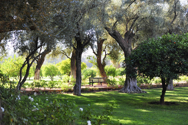 La Mamounia garden | Marrakech: a quick guide