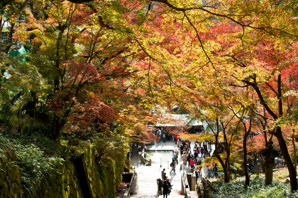 Autumn In Kyoto: Where To Find The Best Foliage (with a map!)