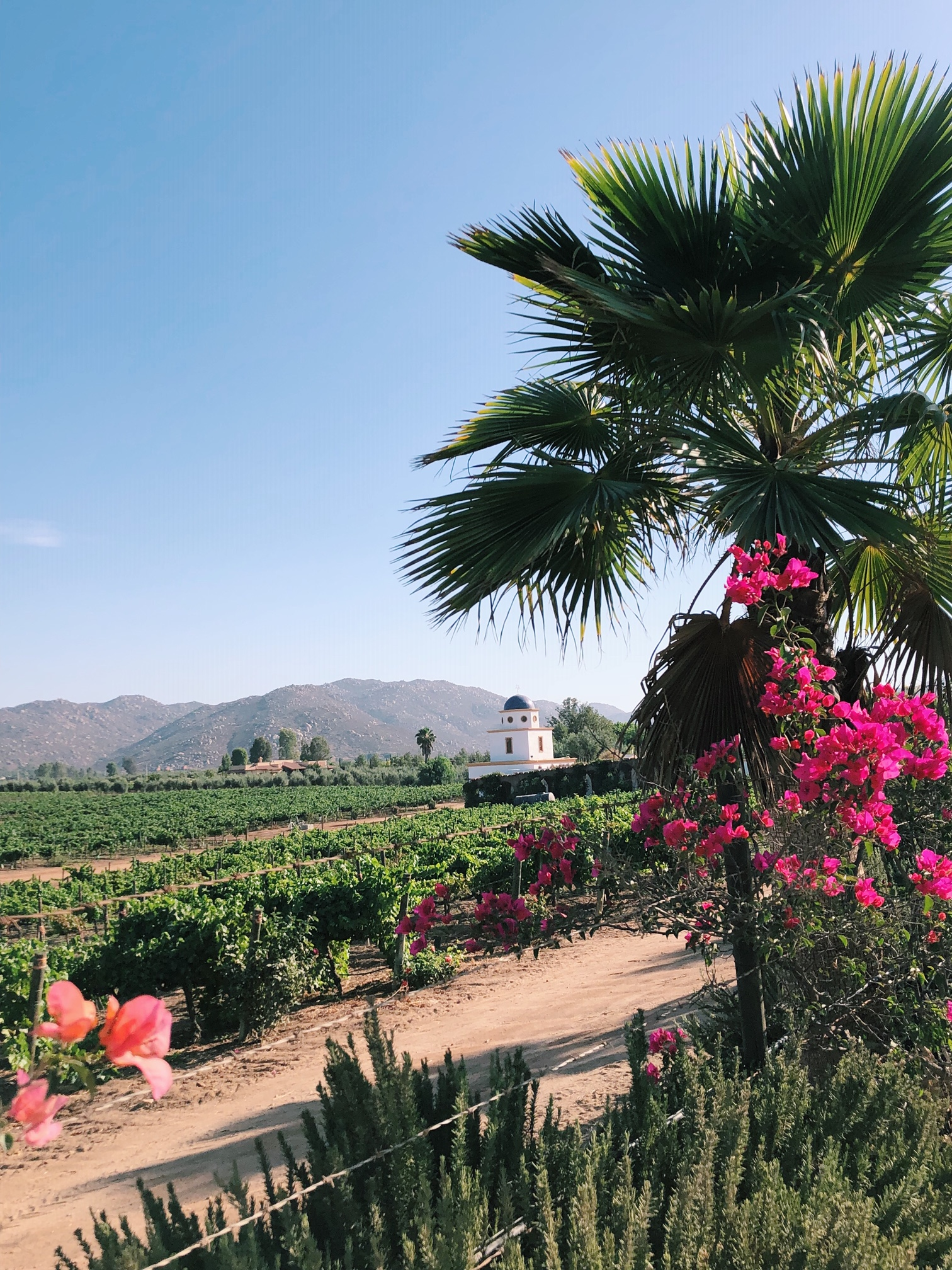 48 Hours in Valle de Guadalupe, Mexico: full itinerary & map