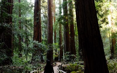 Forest bathing: a simple guide for wellness and relaxation